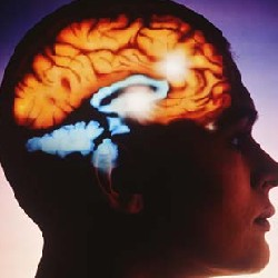 Ученые выяснили, какие люди самые умные