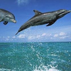 Уникальная способность дельфинов избавляться от диабета