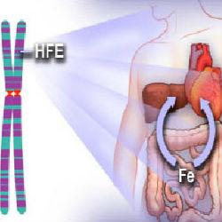 Как справиться с переизбытком железа в организме?