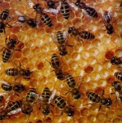 Пчелы - лучшие друзья и защитники человека