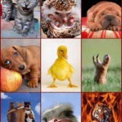 Десять мифов и баек о животных
