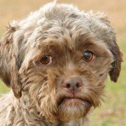 Собаке с человеческим лицом нужен хозяин