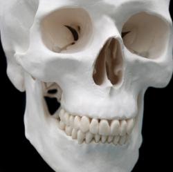 Почему зубы не считаются костями?