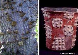 Священные растения из лесов племени Майя