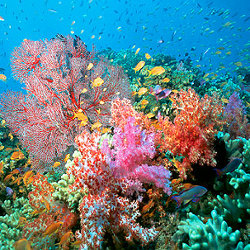 Коралловые рифы исчезнут через 50 лет