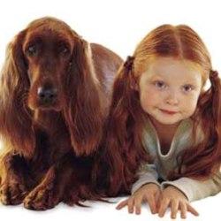 10-летние дети лучше всех понимают собак, выяснили ученые