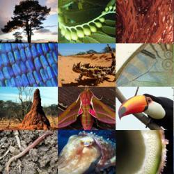 10 изобретений, подсказанных самой природой
