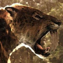 Удивительные саблезубые кошки прошлого, жившие в Европе