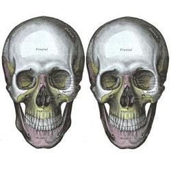 Кости черепа с возрастом меняют форму