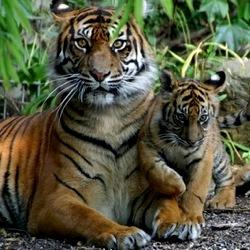 10 видов животных, которым угрожает исчезновение