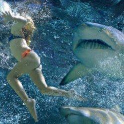 Шокирующие истории об атаках акул