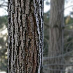Натуральный антиоксидант приостановит старение кожи