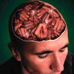 Скачать Реферат На Тему Тайны мозга Реферат