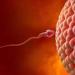 Удивительные факты о сперматозоидах