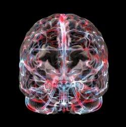 Как воспоминания хранятся в мозге