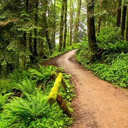 Топ 10 странных и уникальных лесов