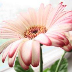 Растения - кислородные бомбы, которые должны быть в каждом доме
