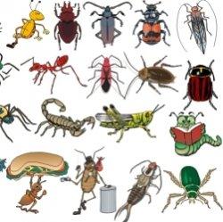 10 самых важных насекомых планеты