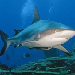 Акулы, или как стать невидимыми