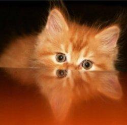 Видеоигры для кошек - последний хит сезона