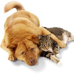 Домашние животные переносят опасные заболевания
