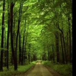 Биотопливо для защиты окружающей среды вреднее обычного