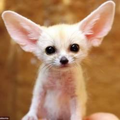 10 обворожительных животных, которым сложно пережить детство