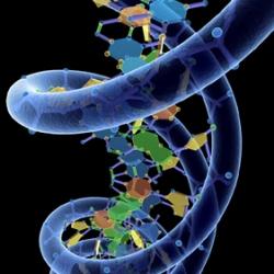 ДНК-тест выявляет связь между старением и бедностью