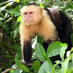 Даже приматы уважают старших