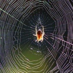 7 удивительных навыков ниндзя у насекомых