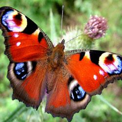 фото бабочек редких