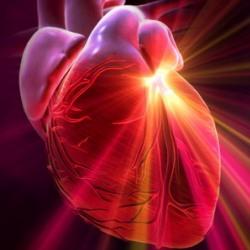 Что вы не знали о своем сердце