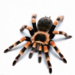 Почему паук всегда вас найдет
