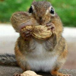 10 интересных фактов о животных, которые вас удивят