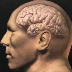 Почему человеческий мозг такой большой?