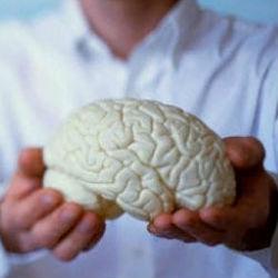 Средиземноморская диета спасет от возрастных мозговых нарушений