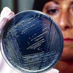 Сальмонелла – это новое оружие против рака