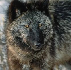 10 животных, которых мы больше всего боимся