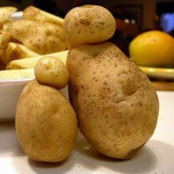 Картофель содержит ген смерти