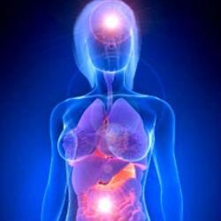 Как здоровье пищеварительного тракта влияет на наш мозг