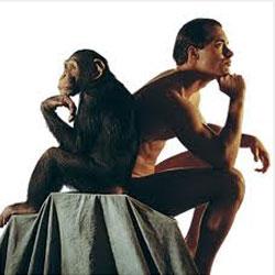 Человек и шимпанзе: сравниваем нас и обезьян