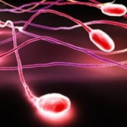 """Сексуальные """"пловцы"""": 7 фактов о сперматозоидах"""
