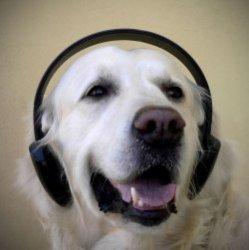 Ученые выяснили, какую музыку предпочитают домашние животные