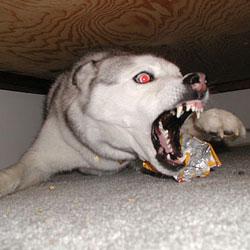 Топ 10 самых злобных собак