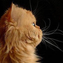 Владельцы кошек более образованны, чем владельцы собак