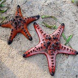 Рецепт долголетия есть у морских животных