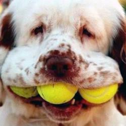 Собака – друг человека. Особенно, если она оптимист