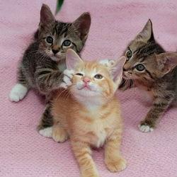 5 удивительных анатомических особенностей кошачьих