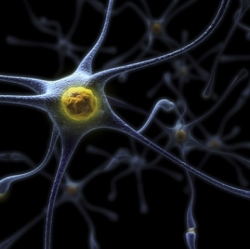 Внутри мозга: путешествие во времени