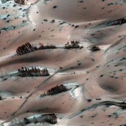 Деревья на Марсе